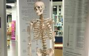 Clarence the skeleton