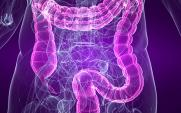 colon and bowel