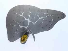 Liver with gallbladder