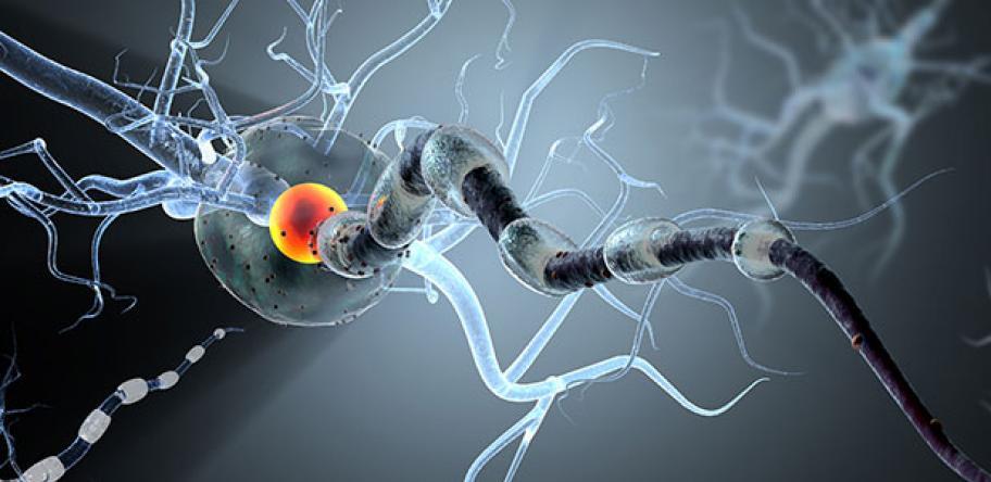 brain action
